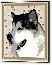 Alaskan Malamute Acrylic Print by One Rude Dawg Orcutt