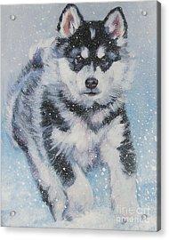 alaskan Malamute pup in snow Acrylic Print by Lee Ann Shepard