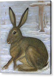 Albert The Hare Acrylic Print by Anna Folkartanna Maciejewska-Dyba