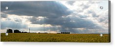 Alberta Wheat Field Acrylic Print by Stuart Turnbull