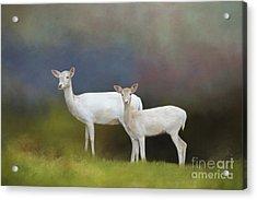 Albino Deer Acrylic Print