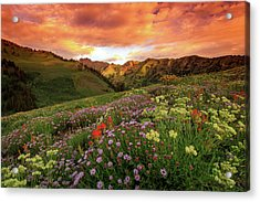 Albion Basin Golden Sunrise Acrylic Print