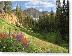 Albion Basin Wasatch Mountains Utah Acrylic Print