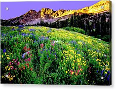 Albion Meadows Acrylic Print