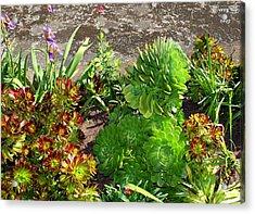 Alcatraz Cactus Garden Acrylic Print