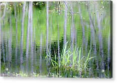 Alder Reflections Acrylic Print by Sheila Ping