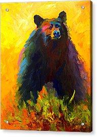 Alert - Black Bear Acrylic Print by Marion Rose