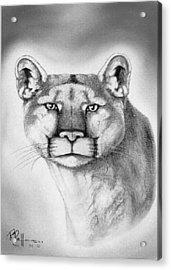 Alert Cougar Acrylic Print by Bob Patterson
