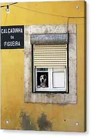 Alfama Dog In Window - Calcadinha Da Figueira  Acrylic Print