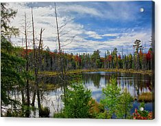 Algonquin In Autumn Acrylic Print