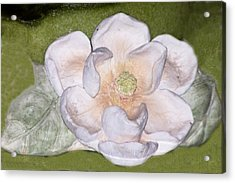 Alien Bloom Acrylic Print by Chuck Shafer