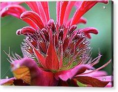 Alien Plant Life Acrylic Print
