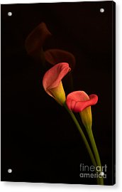 Alison's Flower Acrylic Print by Robert Pilkington