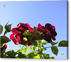 All About Roses And Blue Skies II Acrylic Print by Daniel Henning