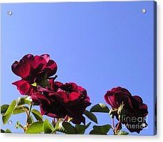All About Roses And Blue Skies Xi Acrylic Print by Daniel Henning