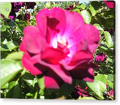 All About Roses And Green Leaves I Acrylic Print by Daniel Henning