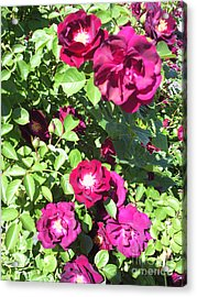 All About Roses And Green Leaves II Acrylic Print by Daniel Henning