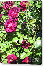 All About Roses And Green Leaves IIi Acrylic Print by Daniel Henning