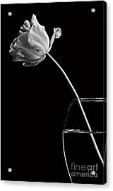 All Alone Acrylic Print