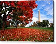 All American Acrylic Print by Bernard Chen