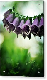 All Becomes Festival Acrylic Print by Rebecca Sherman
