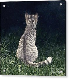 All Cats Are Gray By Night Acrylic Print by Jutta Maria Pusl