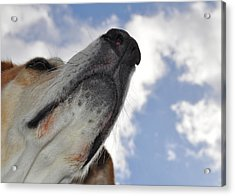 All Dogs Go To Heaven Acrylic Print by JAMART Photography