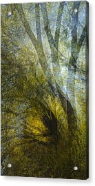 All Fall Down Acrylic Print