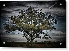 All Grown Up Acrylic Print by Skip Willits