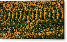 Acrylic Print featuring the photograph All In A Row by Chris Berry