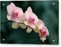 All In A Row Acrylic Print by Don Schroder