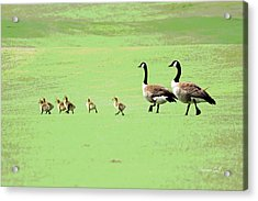 All In The Family II Acrylic Print by Suzanne Gaff