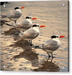 All Lined Up Acrylic Print by Susanne Van Hulst
