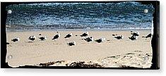 All My Gulls In A Row Acrylic Print by Ellen Lerner ODonnell