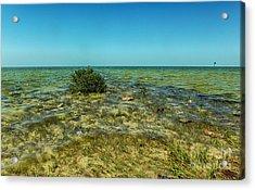 All Natural Shoreline Acrylic Print by Judy Hall-Folde