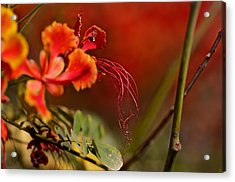 All That Way For This Acrylic Print by Thorne Owenly