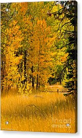 All The Soft Places To Fall Acrylic Print