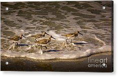 All Together Now Acrylic Print