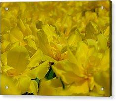 All Yellow Acrylic Print by Simona Stroescu