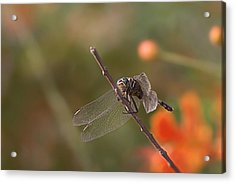 All You Birds 'n Bees Got Nothin' On Me Acrylic Print by Thorne Owenly