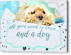 All You Need Is Love And A Dog Acrylic Print by JC Findley