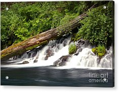 Allen Springs On The Metolius River Acrylic Print