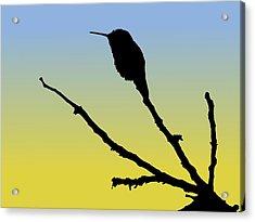Allen's Hummingbird Silhouette At Sunrise Acrylic Print
