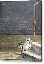 Alley Cats - Gatti Randaggi Acrylic Print