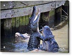 Alligator Hugs Acrylic Print by Paulette Thomas