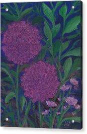 Allium And Geranium Acrylic Print