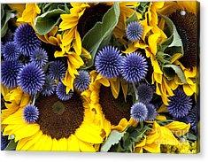 Allium And Sunflowers Acrylic Print