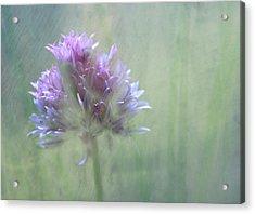 Allium Impressionism Acrylic Print by Catherine Alfidi