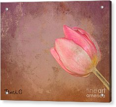Acrylic Print featuring the photograph Allure by Traci Cottingham