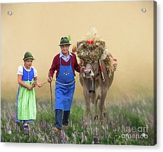 Acrylic Print featuring the photograph Almabtrieb by Eva Lechner
